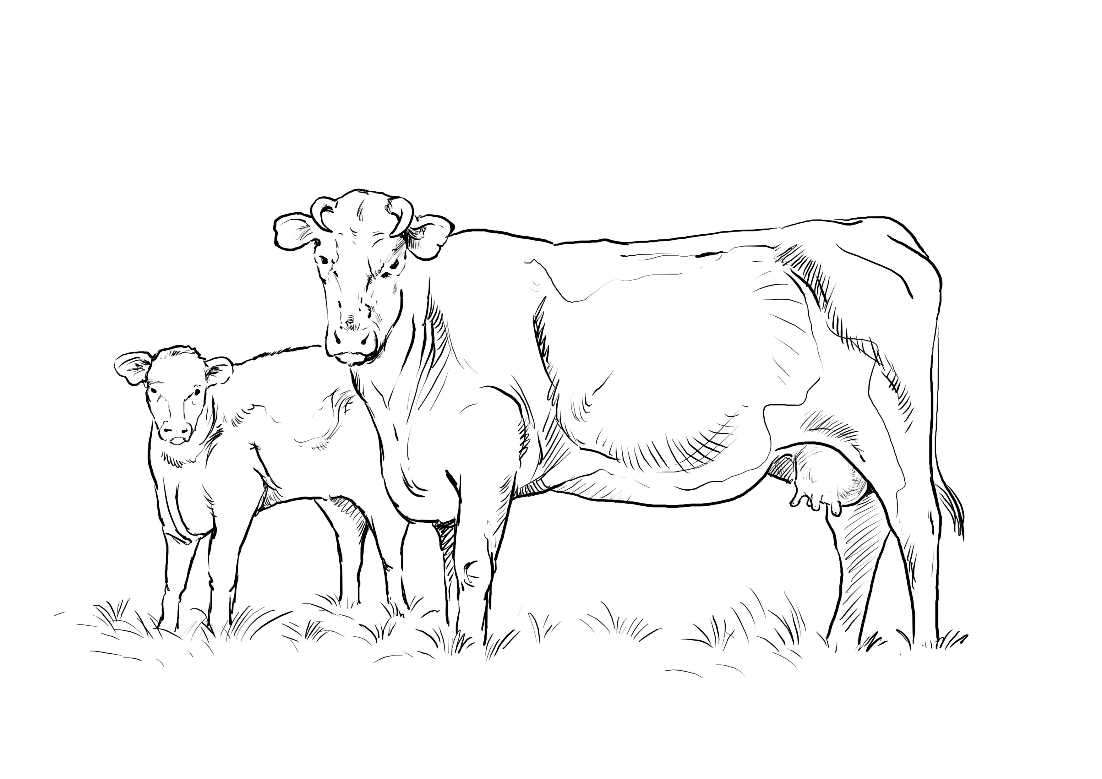15+Malvorlage Kuh Mit Kalb