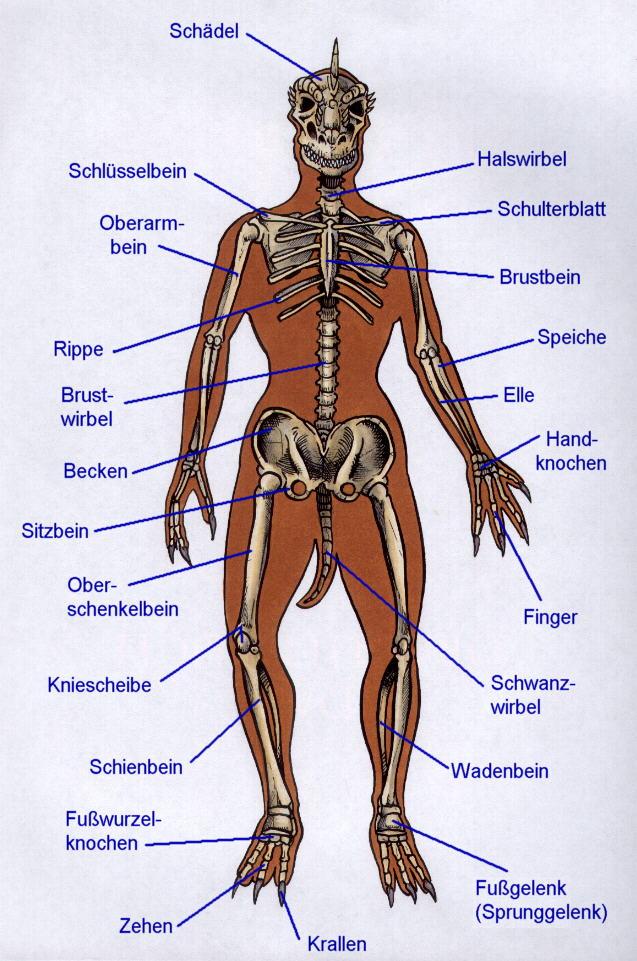 Großartig Anatomie Der Brust Knochen Bilder - Anatomie Von ...